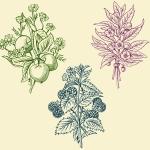 animalsplants-03