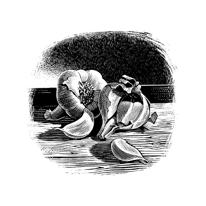 fred-van-deelen-illustrator-Black-and-white-illustration-scraperboard-engraving-garlic