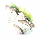fred-van-deelen-illustrator-animals-painting-watercolour-salmon-jumping-fish