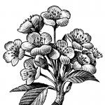 fred-van-deelen-illustrator-plants-01-illustration copy