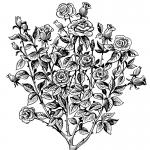 fred-van-deelen-illustrator-plants-03-illustration