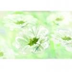 fred-van-deelen-illustrator-plants-05-illustration