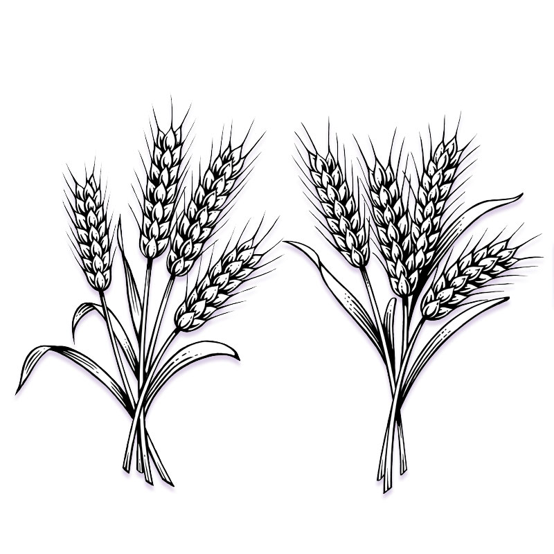 fred-van-deelen-illustrator-plants-06-illustration