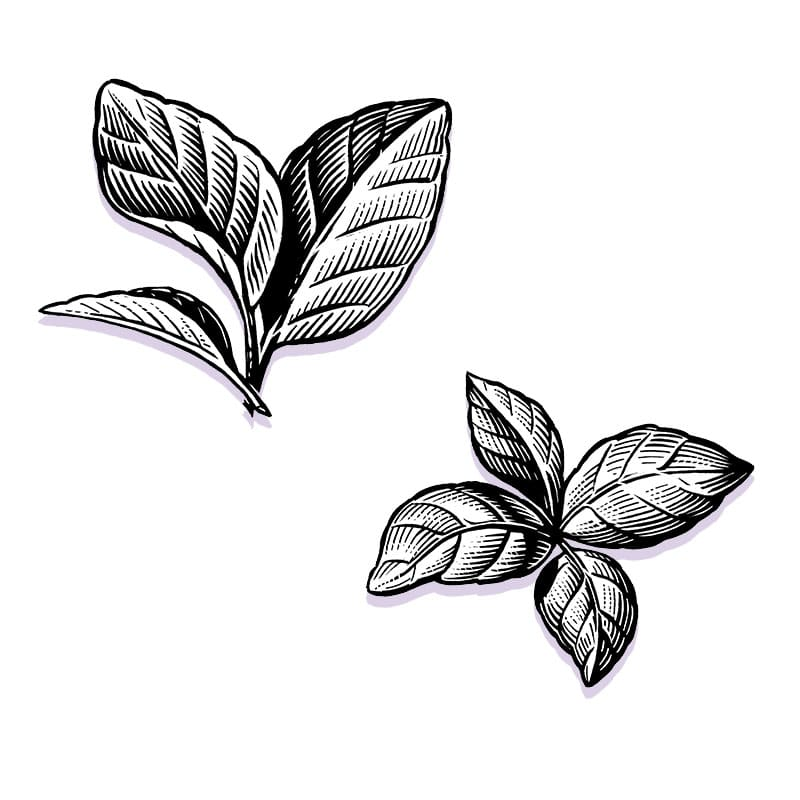 fred-van-deelen-illustrator-plants-07-illustration