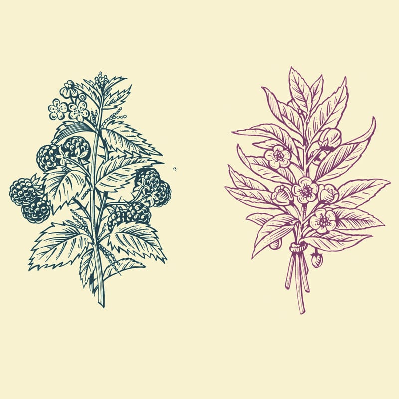 fred-van-deelen-illustrator-plants-09-illustration