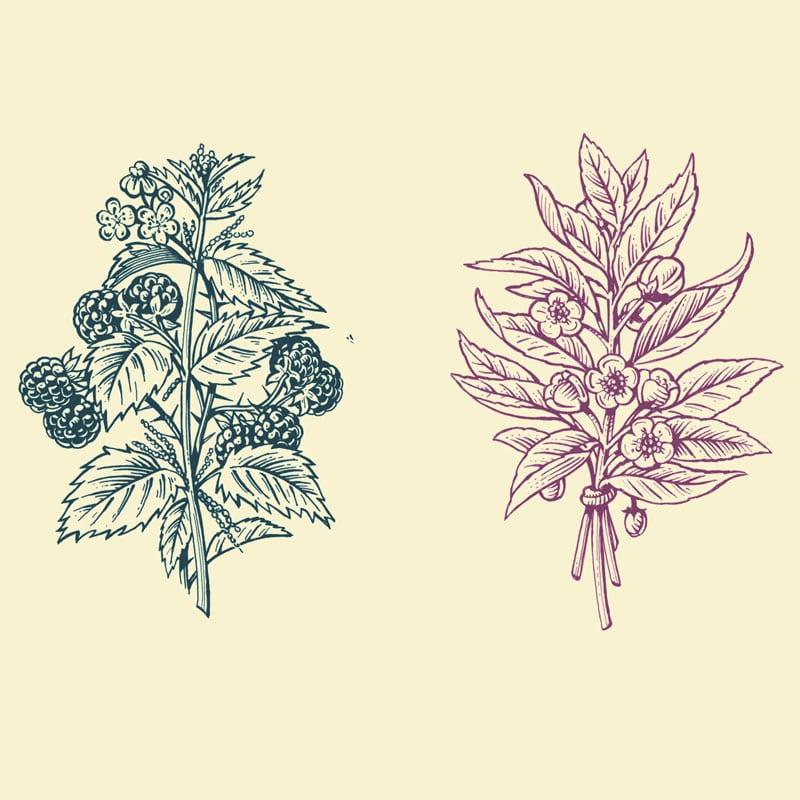 fred-van-deelen-illustrator-plants-09-illustration