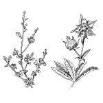 fred-van-deelen-illustrator-plants-10-illustration