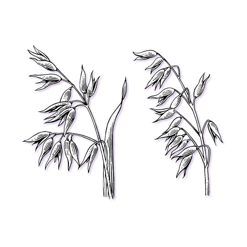 fred-van-deelen-illustrator-plants-11-illustration