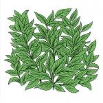 fred-van-deelen-illustrator-plants-12-illustration
