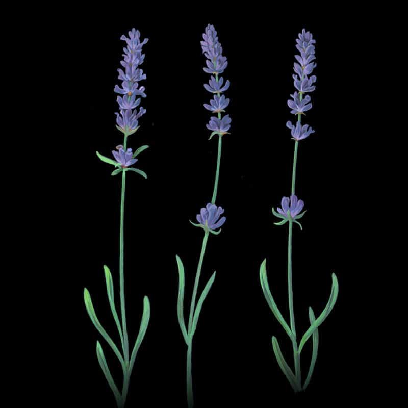 fred-van-deelen-illustrator-plants-13-illustration
