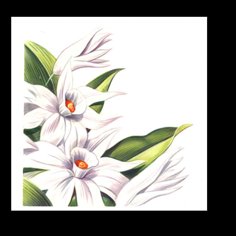 fred-van-deelen-illustrator-plants-14-illustration