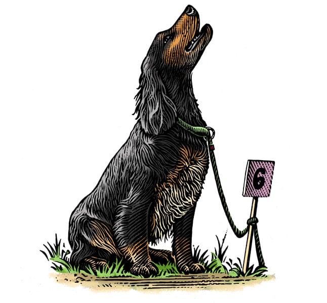 fred-van-deelen-scraperboard-illustration-hunting-dog